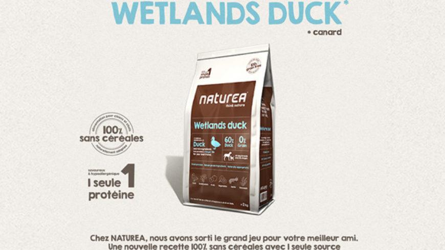 Wetlands Duck